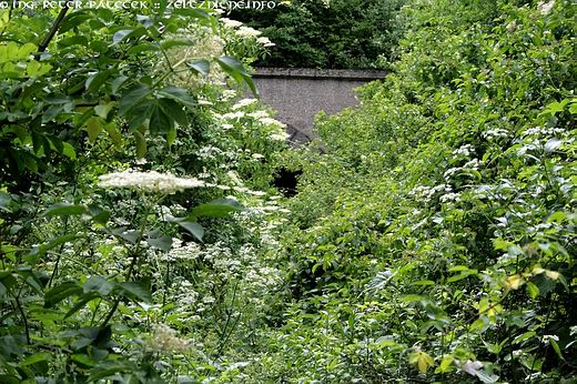 Trať 175 - Oždany tunel